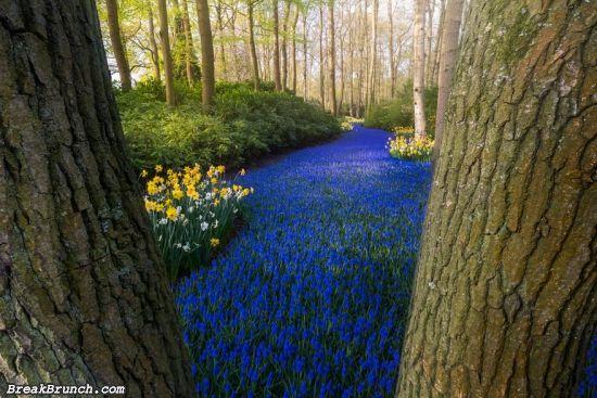 25 beautiful flower gardens around the world