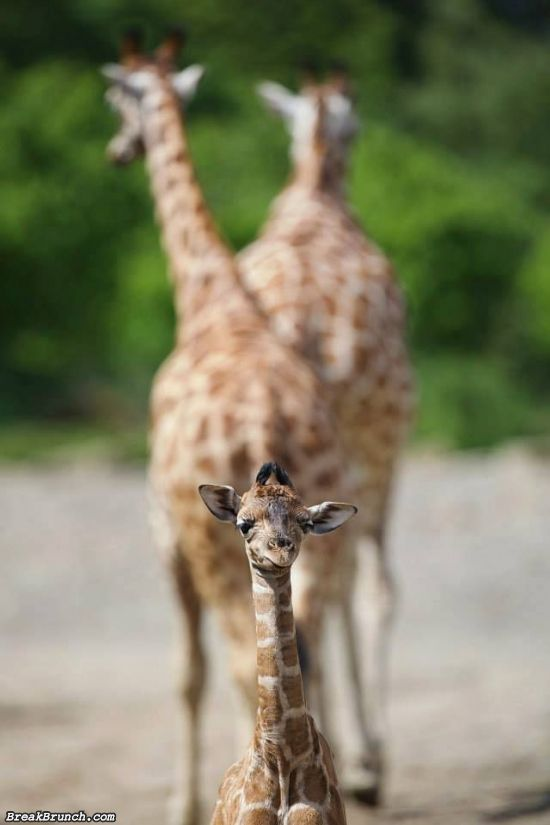 cute-animal-5e97d5e7477ab3607