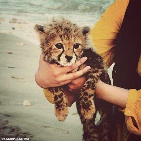 cute-animal-5e97d615835ad7bdb