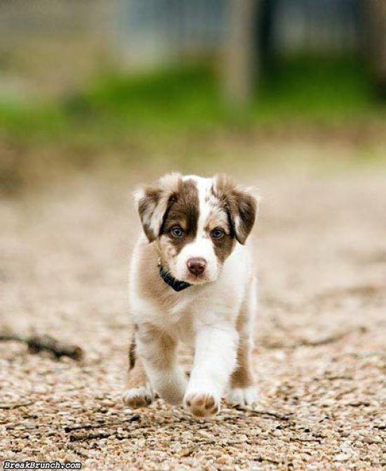 cute-animal-5e9c95455d8239364