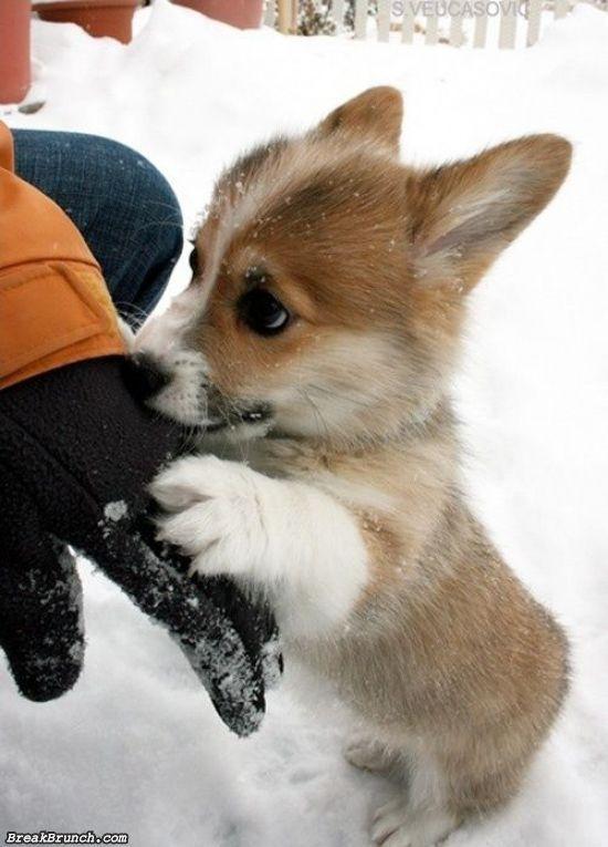 cute-animal-5e9c955ed33fe9eff