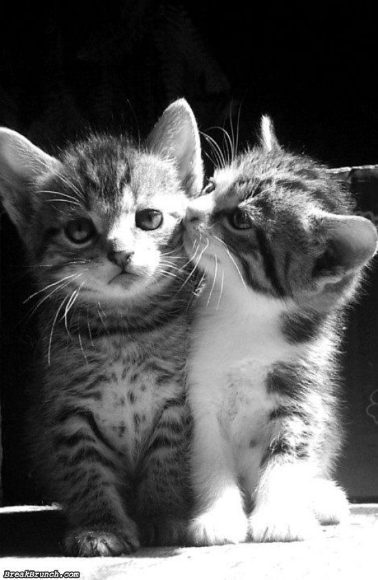cute-animal-5e9c95a21679bcd53