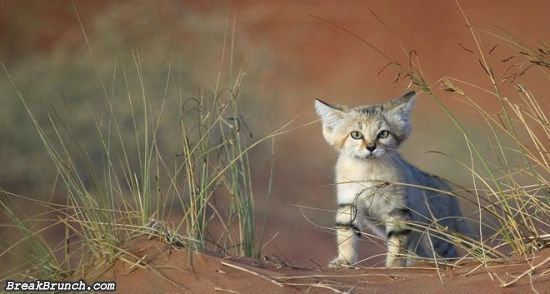 cute-animal-5e9c95a8ed582e208