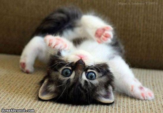 cute-animal-5e9c95af4bc9b3ba8