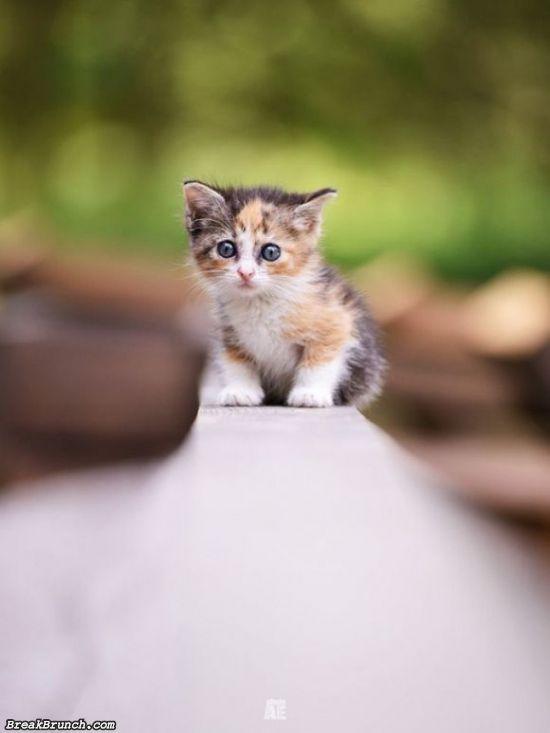 cute-animal-5ea35bd07ad11096f