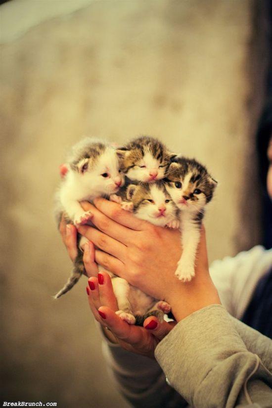 cute-picture-5e98f08ab21ce32a4