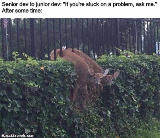 developer-humor-5e9c9bee1e7a23442