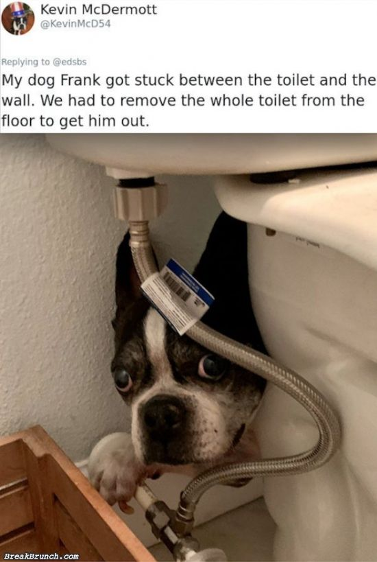 28 funny dog pictures for Wednesday