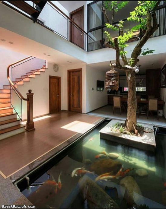 Beautiful indoor fish tank