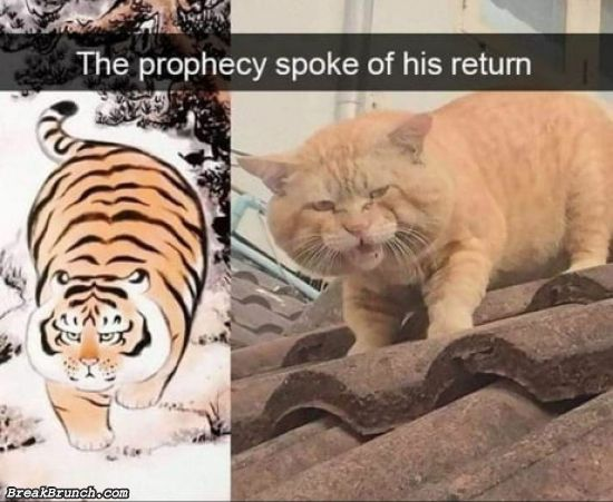 The return of the cat