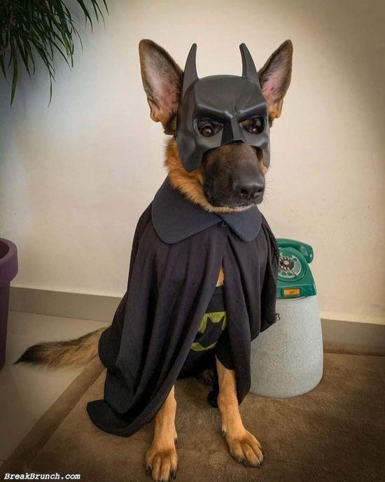 The batdog