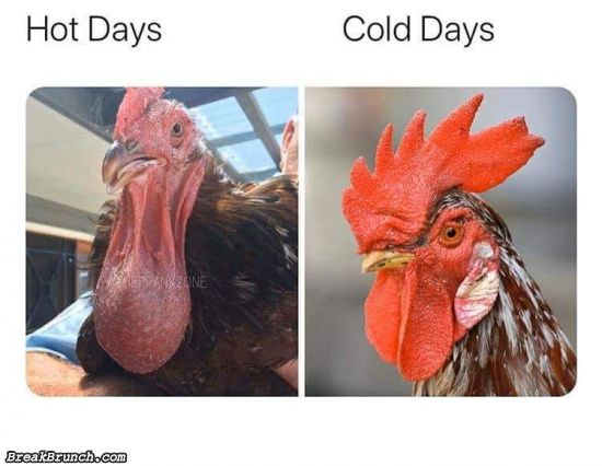 Hot days vs cold day
