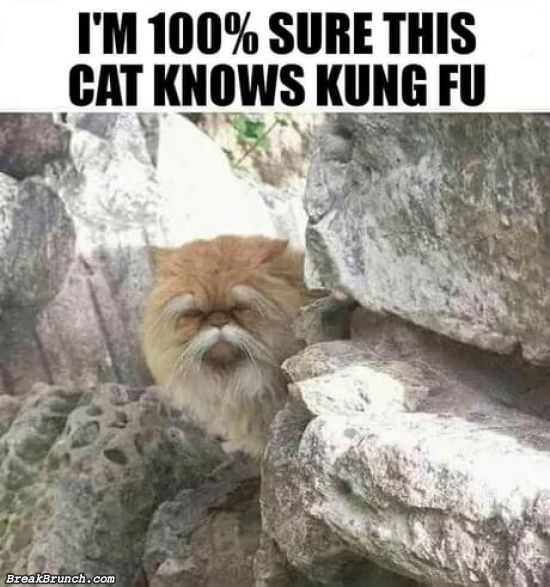 Time to get the kung fu  mission from this cat