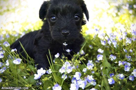 cute-animal-5ea35bd6ee4663327