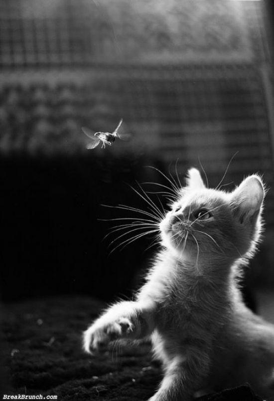 cute-animal-5ebdfd9085fea54ff
