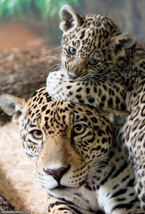 cute-animal-5ebdfd9e563b22b6d