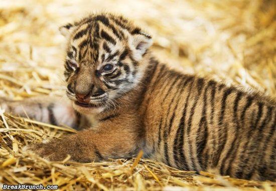 cute-animal-5ebdfdfbc373b8ebc
