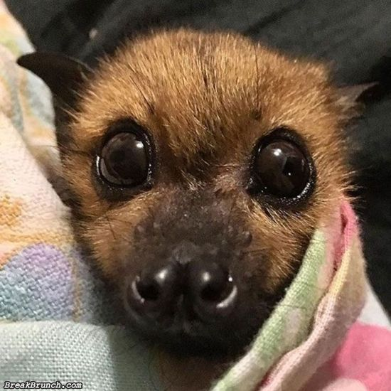 10 adorable pictures of bats