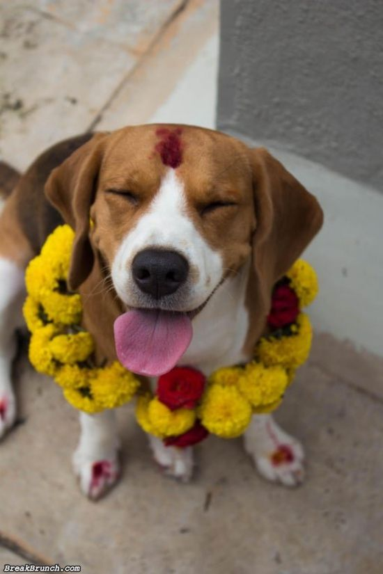 20 cute dogs at festival