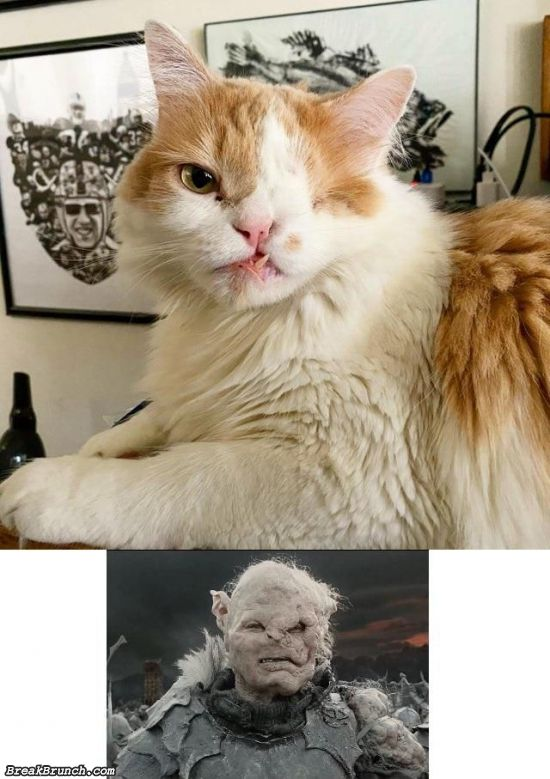 Lord of the Ring cats