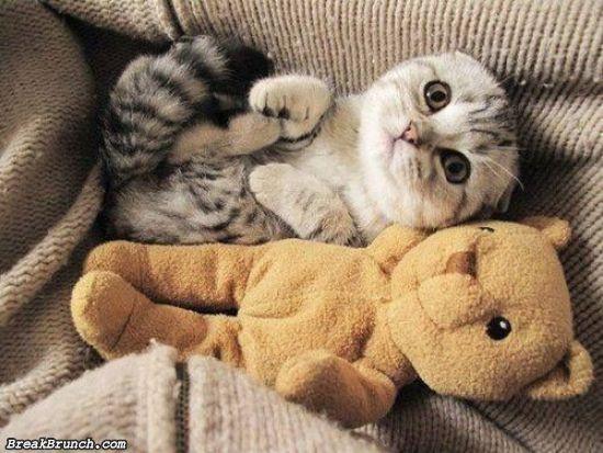 cute-animal-5ea35c3a53afa344d