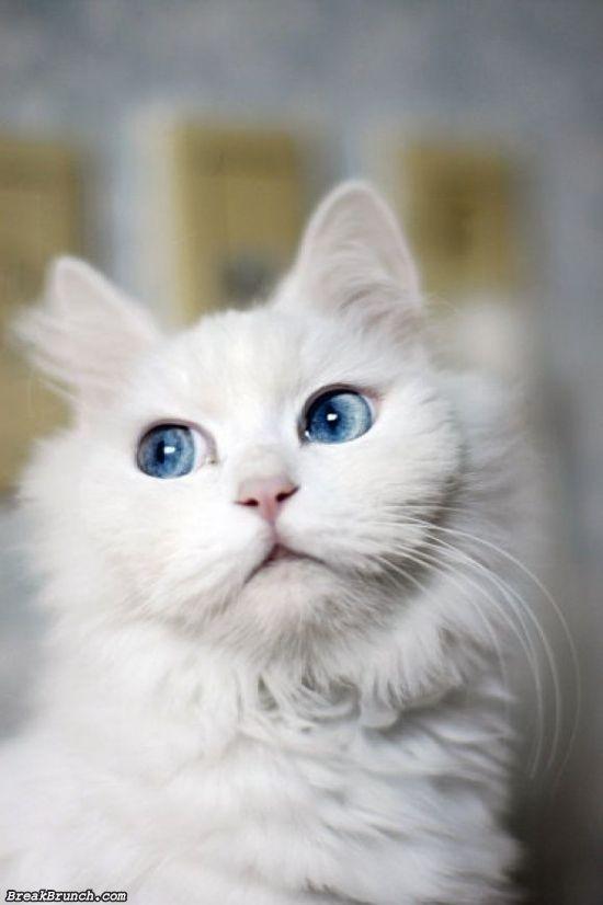 cute-animal-5ed5ac498e732fb10