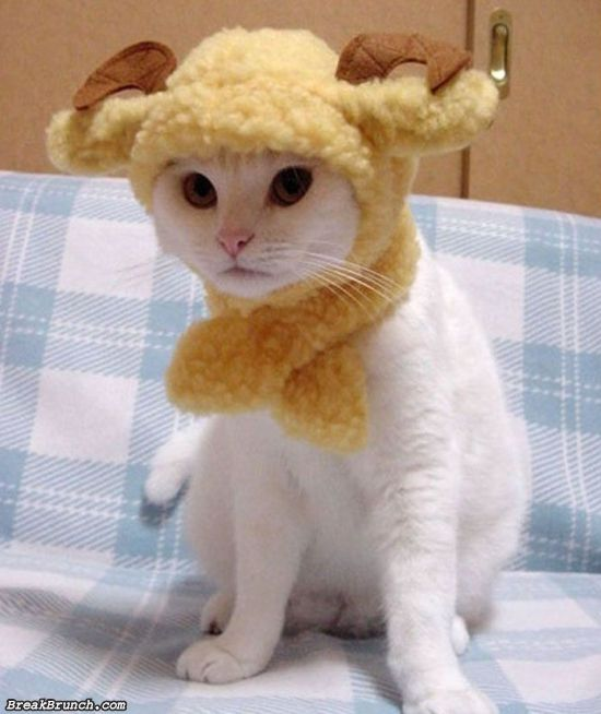 cute-animal-5ed5ac847148588ba