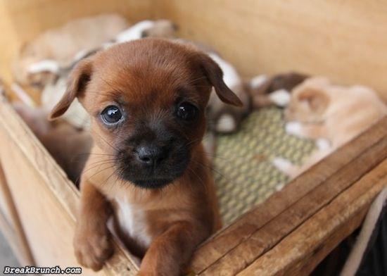 cute-animal-5ed5ac982869b647b