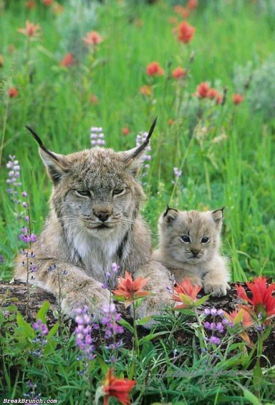 cute-animal-5ed5acabbbf977222