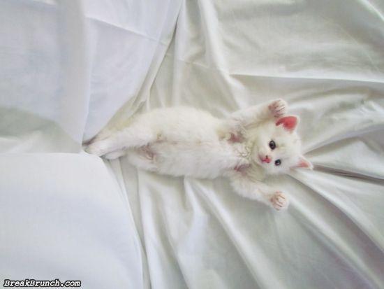 cute-animal-5ed5acbfc303f2e8c