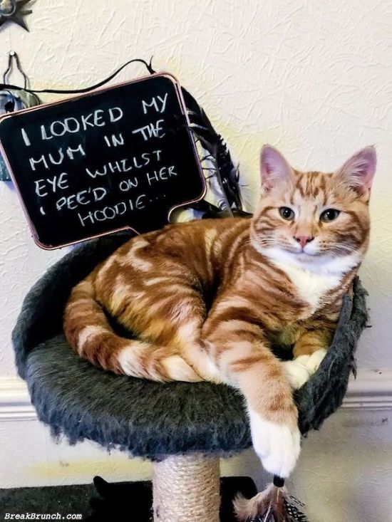 30 funny pet shaming pictures