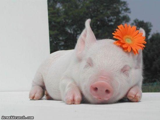 cute-animal-5ed5ac6a428c8ac96