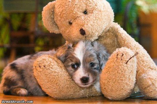 cute-animal-5ed5ac919a498bd56
