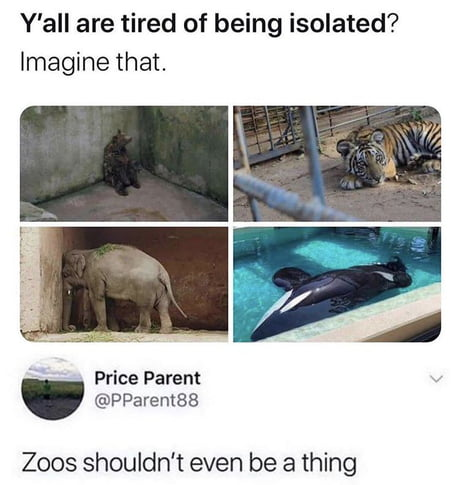 Zoos should not even be a thing