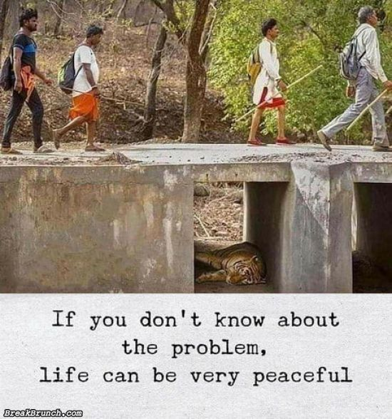 Life can be very peaceful if you don't know about the problem