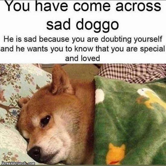 Doggo wants you to love yourself