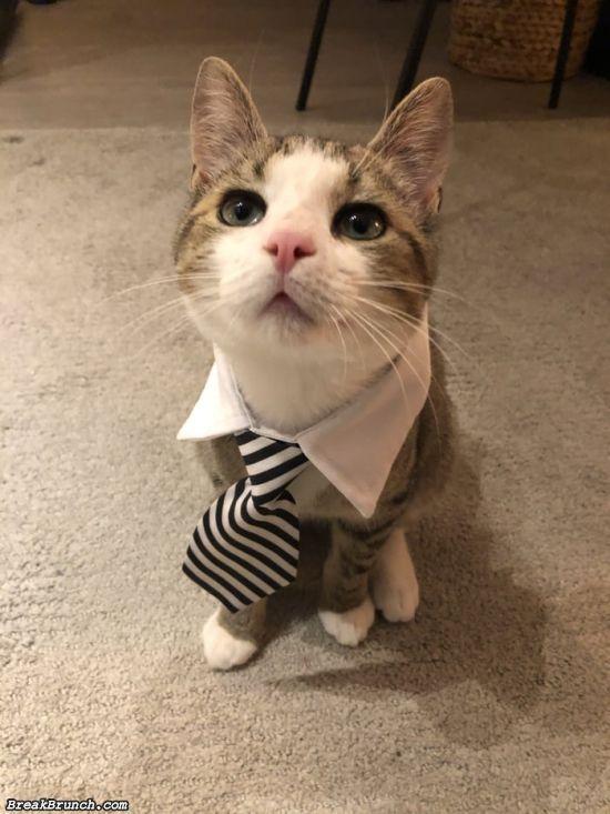 Cute business cat