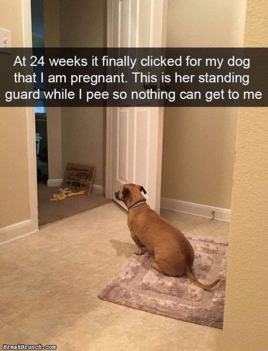 Dog's watch begin